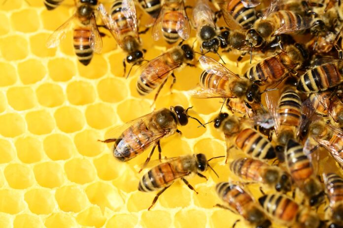 Can bees really detect explosives?