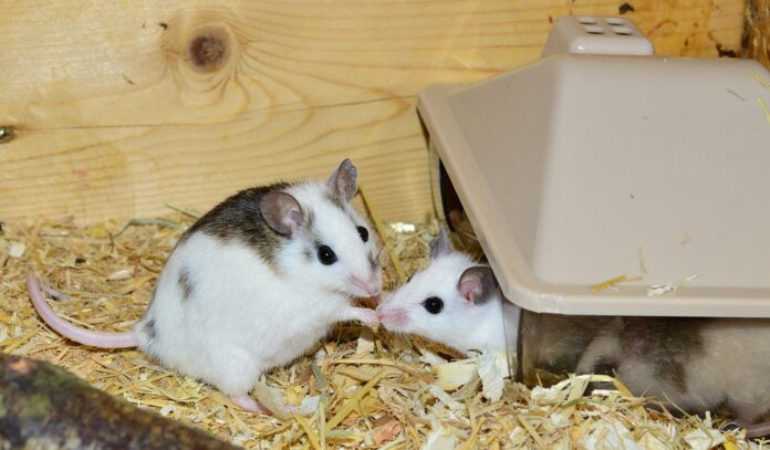 Scientists have inserted nanoparticles into the eyes of mice