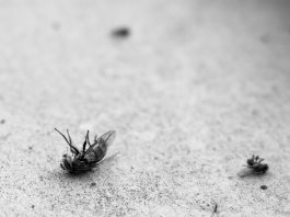 Why do insects die with their legs up?